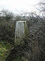 Trig Point 3599 on hanging Hill - geograph.org.uk - 530840.jpg