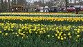 Tulip garden Keukenhof 5.jpg