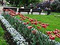 Tulips. Prague. Czech Republic. Тюльпаны. Прага. Чехия - panoramio.jpg