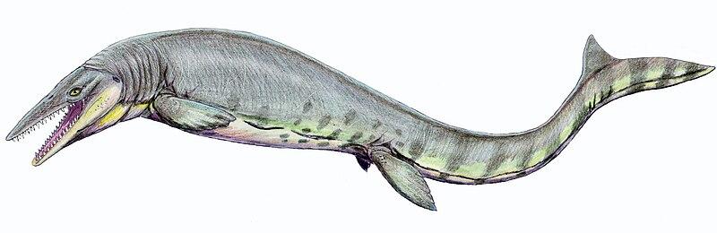 Tylosaurus pembinensis 1DB.jpg