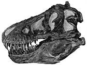 Profile view of a Tyrannosaurus skull (AMNH 5027).