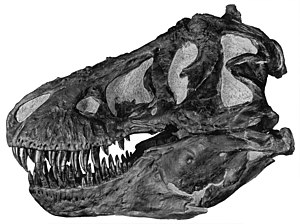 1892 in paleontology - Manospondylus may be a synonym of Tyrannosaurus.