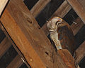 Tyto alba Morsan.jpg