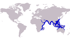 Ulua mentalis distribution.png
