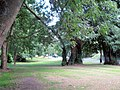 Under the trees by Brook Street, Tring - geograph.org.uk - 1454286.jpg