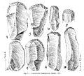 Upper Paleolithic scrapers Wellcome M0015595.jpg