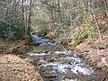Upper Pine Bottom State Park Run 4.jpg