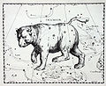 Ursa Major Hevelius.jpg