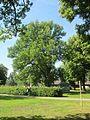 Utmärkt Slottsträdgård i Vadstena.jpg