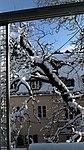Valentinhaus-Gärten im Winter 14.jpg