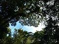 Vegetación de la Reserva de la Biosfera La Amistad Panama (RBLAP) 39.JPG
