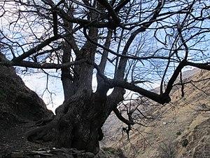 Vereda de La Estrella. Sierra Nevada.JPG