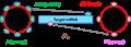Vi.ARN vòng circRNA.png