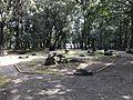 View in Miyazaki Shrine.jpg