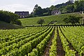 Vignobles de Volnay.jpg