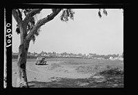 Vintage activities at Richon-le-Zion, Aug. 1939. Richon-le-Zion. Gen(eral). Distant view LOC matpc.19792.jpg