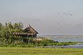 Vogelkijkhut Lauwersmeer gebied 2.jpg