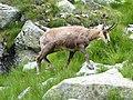 Vysoké Tatry, Dolina Bielej vody, cestou od Zeleného plesa na Jahňací štít (38).JPG