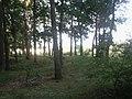 Włocławek, Poland - panoramio (11).jpg