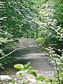 Waldweg im Naturpark Schönbuch - panoramio.jpg