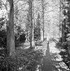 wandelbos midden in de kloostertuin, de voormalige economietuin - simpelveld - 20329798 - rce