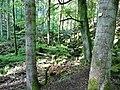 Wanderweg im Schweinbachtal zwischen Hirsau und Oberreichenbach - panoramio (3).jpg
