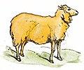 Watercolor Sheep Drawing.jpg