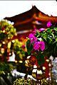 Wenwu Temple (文武廟) - panoramio (2).jpg