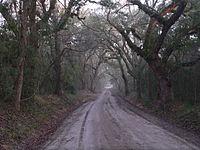 Wescott Road (Edisto Island) 1.JPG