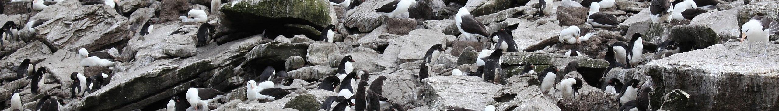 West point island wikivoyage guida turistica di viaggio for Hopper finestra sul mare