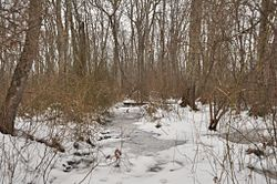 WestboroughMA CedarSwampWinter.jpg