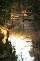 Wheatfen Nature Reserve, footbridge.jpg