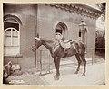 White House stables - Mrs. Roosevelt's mare LCCN2010645539.jpg