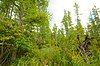 White River Prairie-Tamaracks.jpg