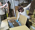 Wildlife inspectors check animal hides in a legal shipment of wildlife products. Credit-Catherine J. Hibbard-USFWS (16308710296).jpg