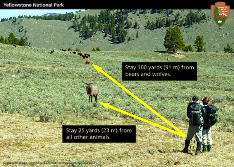 File:Wildlife safety distance composite (28309383250).jpg