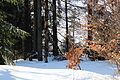 Wilkowice, Magurka - zimą 6.JPG
