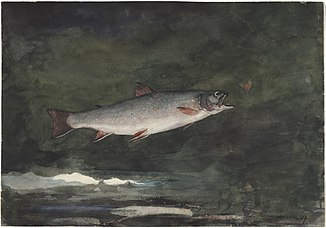 Winslow Homer - Leaping Trout (1889).jpg