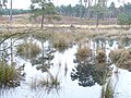 Wisley Common Pond - geograph.org.uk - 1088975.jpg