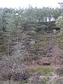 Wooded Valley, Grane - geograph.org.uk - 1205672.jpg