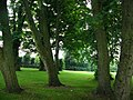 Woodland, Alnwick Garden - geograph.org.uk - 918855.jpg