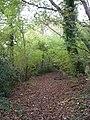 Woods behind New Town - geograph.org.uk - 273673.jpg