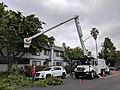 Workers trimming a tree using a cherry picker.jpg