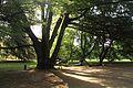 Zámecký park, Sychrov (5).jpg