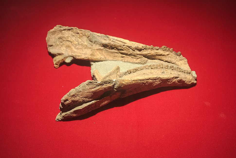 Zigong Dinosaur Museum Gigantspinosaurus jaw
