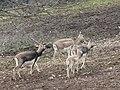 Zoo des 3 vallées - Animaux - 2015-01-02 - i3390.jpg