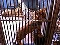 Zoo løveunge - panoramio.jpg