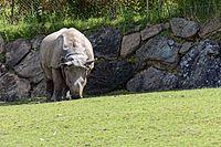 Zooparc de Beauval - Rhinocéros indien - 2016 - 003.jpg