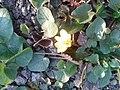 """""""Сонячні квіти"""" Фото-0842.jpg"""