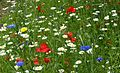 'Grow wild' Flower seeds - Flickr - gailhampshire.jpg